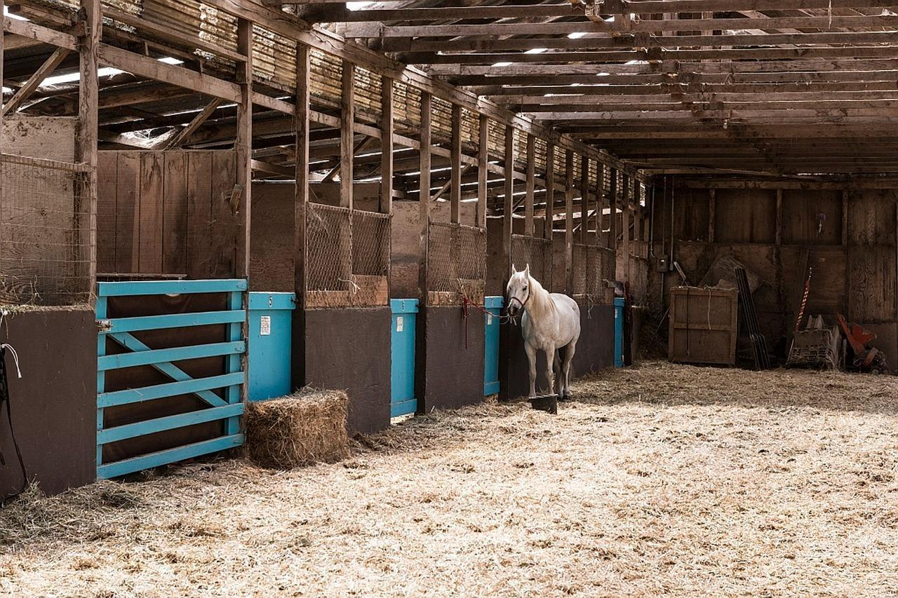 Wisconsin Horse Barns with Farmhouses for sale