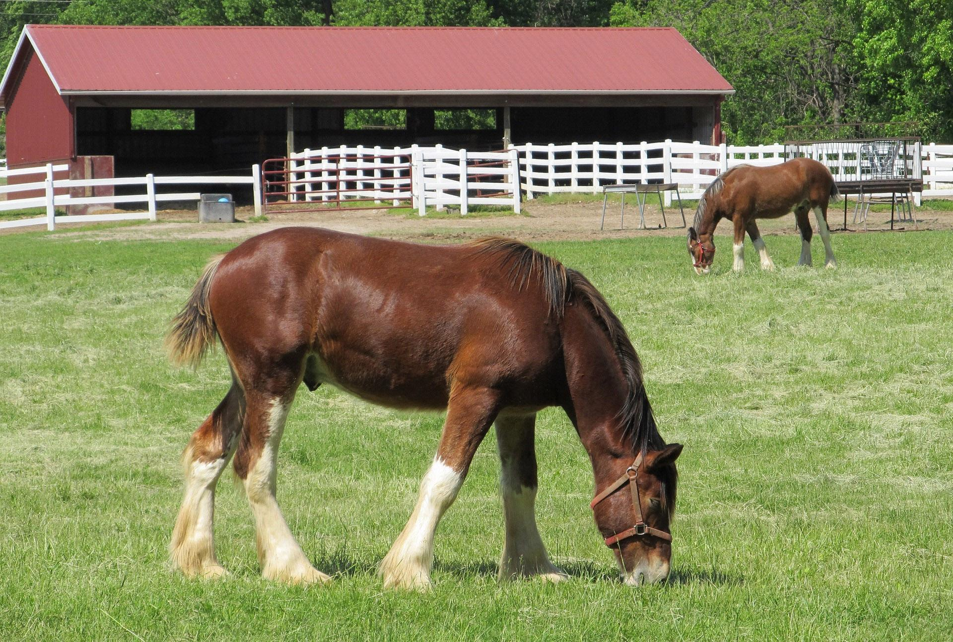 WI Horse Barns with Farmhouses for sale