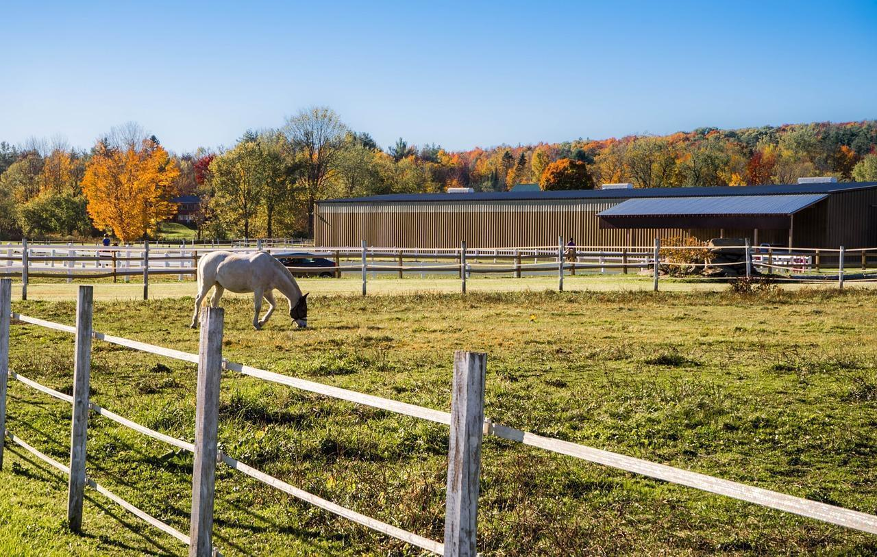 Wisconsin Horse Barns with Farmland for sale