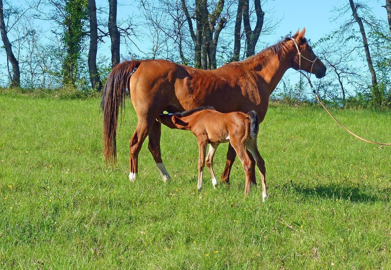 Wisconsin Horse Land for Sale 500K to 1 Million - WI Horses