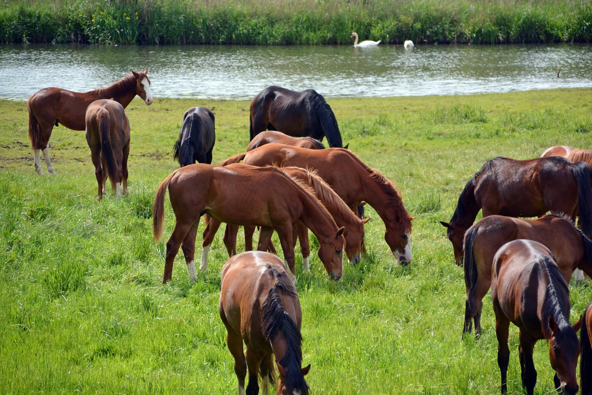 Waterfront Horse Farms for Sale in Wisconsin