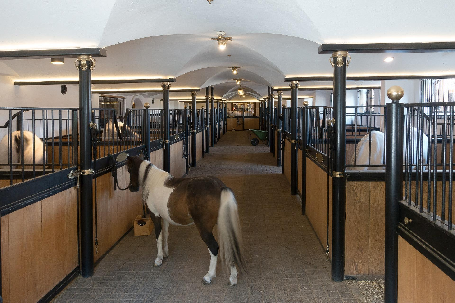 WI Horse Farms for Sale on Acreage