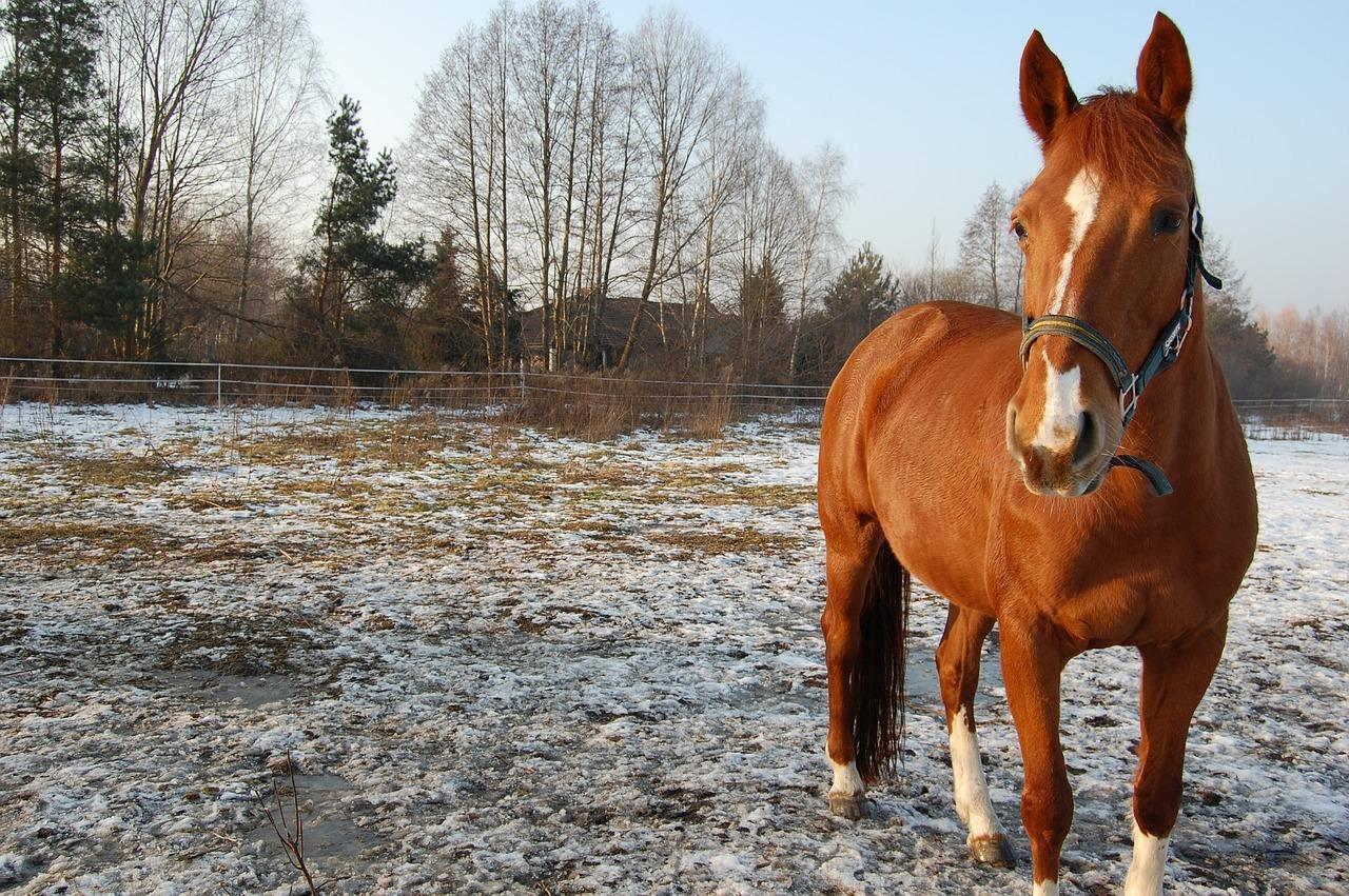 WI Horse Land for Sale under 100K